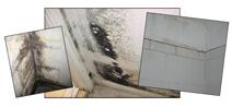 moldy-walls